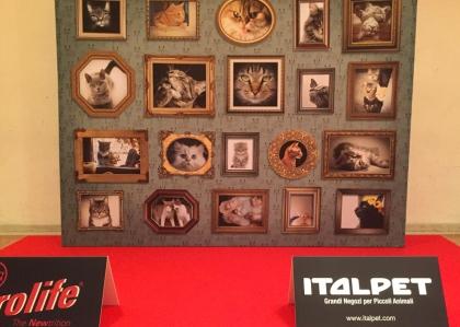 Evento-mostra-felina-prolife-arteco-stampa-in-grande-formato