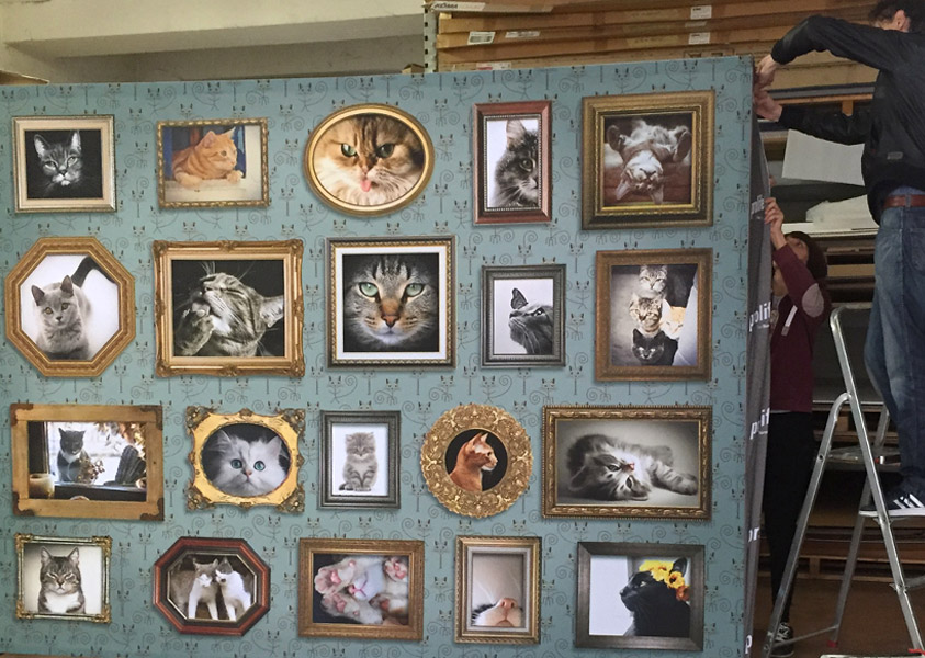 Eventi: mostra felina in granguerdia a Verona per Prolife